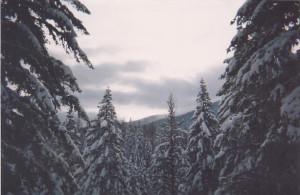 Trees n Snow 001