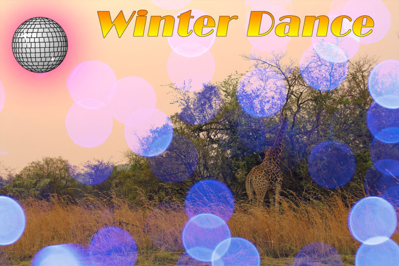 safari winter dance